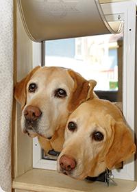 Cute dogs using dog door